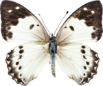 Превью All Natural (3) (520x434, 391Kb)
