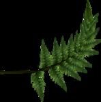 Превью All Natural (134) (567x572, 196Kb)