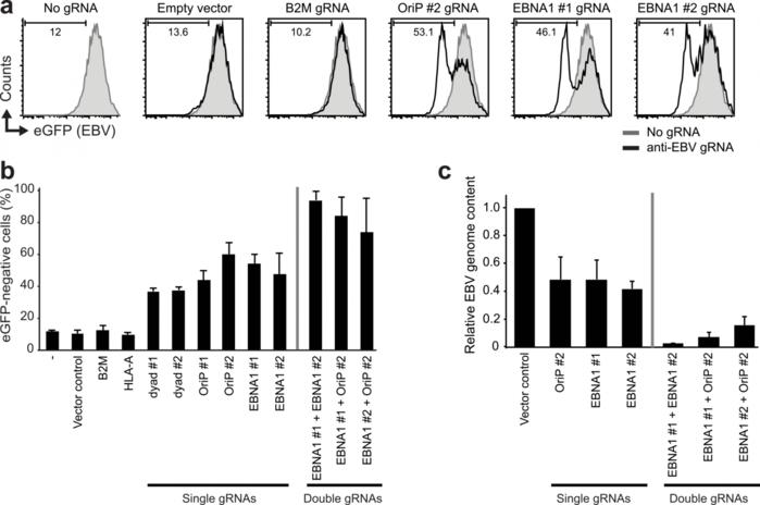 Биологи нашли способ победить герпес (система CRISPR/Cas9)