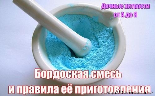 6009459_75_4_ (500x309, 116Kb)