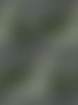 Превью 2 (447x600, 19Kb)