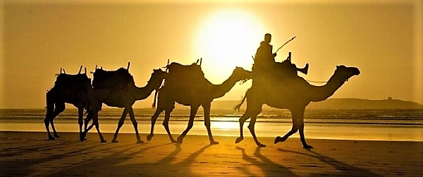 5284814_bedouinsoncamelssilhouettedesertsunset149970_3_ (600x251, 62Kb)