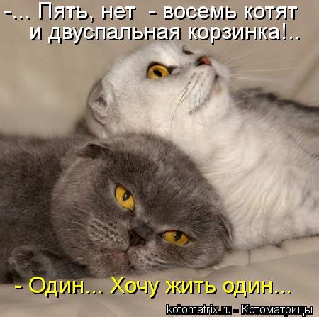 котики (450x447, 36Kb)