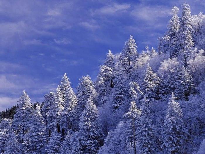 Красивая зима (700x525, 108Kb)