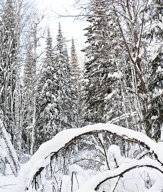 зимний лес (550x650, 273Kb)
