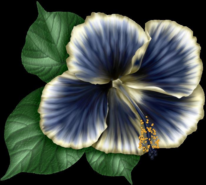 bsd_Floral Elegance_ Element (22) (700x626, 478Kb)