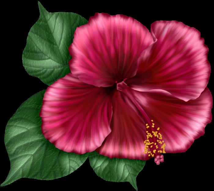 bsd_Floral Elegance_ Element (23) (700x626, 467Kb)