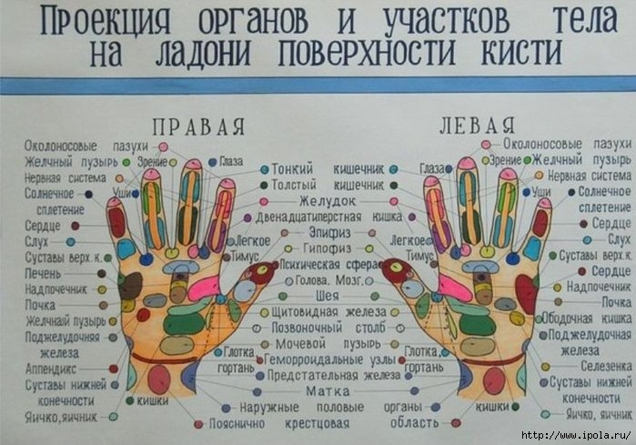"alt=""Точки здоровья и долголетия на стопах и ладонях""/2835299_Proektsii_organov_na_ladoni_i_stopyi_03908617_00873611 (700x489, 215Kb)"