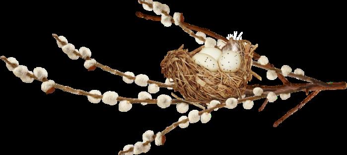 верба гнездо (699x312, 152Kb)