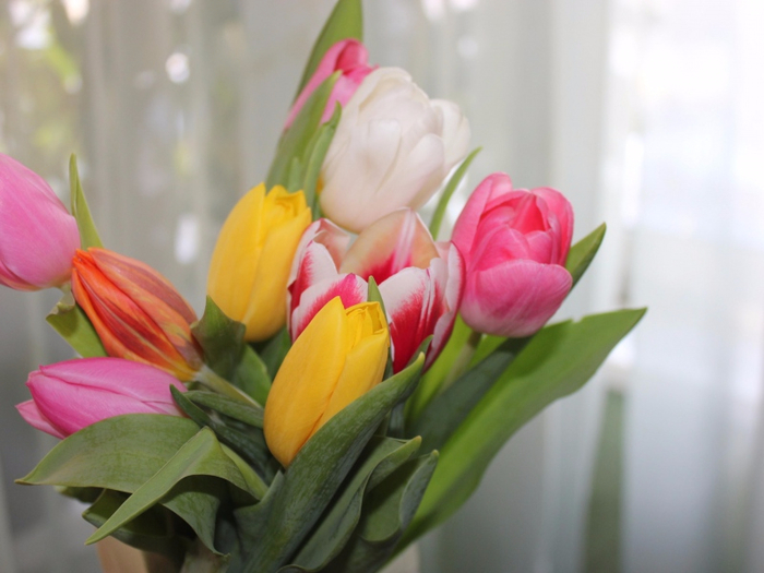 tulips-flowers-colorful-bouquet-spring-800x600 (700x525, 297Kb)