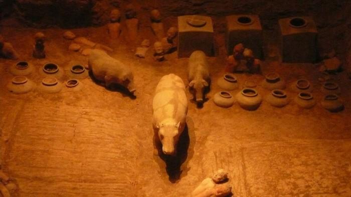 Самый древний в мире чай   2000 летний напиток найден в могиле императора