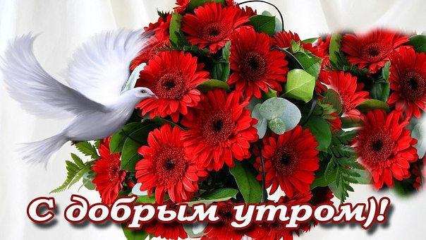 3768849_ytro_dob__ (604x340, 69Kb)