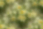 Превью 2 (640x435, 64Kb)