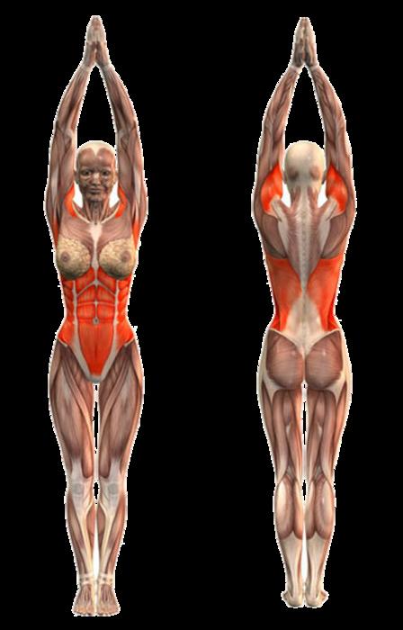 убрать жир со спины и боков