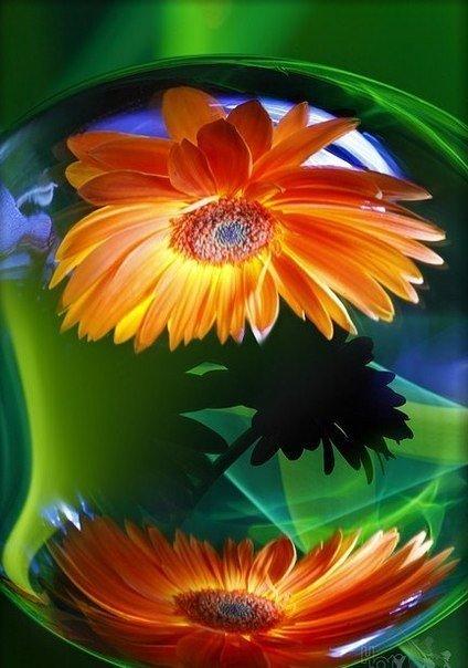 цвет и свет 2 (424x604, 238Kb)