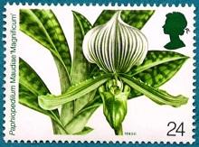 Орхидеи 3 (220x163, 25Kb)