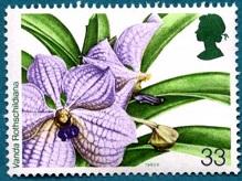 Орхидеи 5 (219x164, 25Kb)