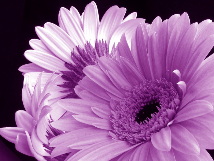 945725__purple-flowers_p (700x526, 378Kb)