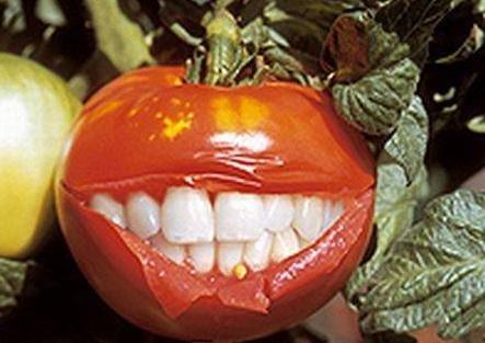Отменить государственную регистрацию ГМО (443x313, 27Kb)