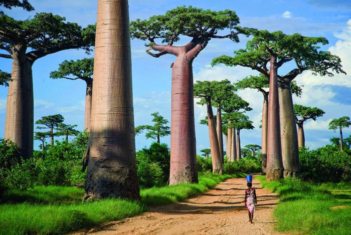 2. Аллея баобабов, Мадагаскар (700x469, 484Kb)