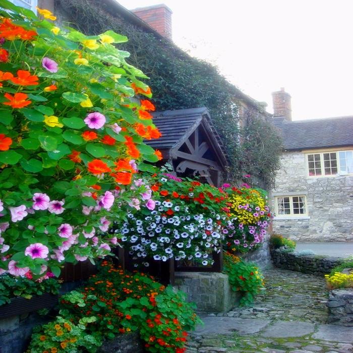 Выбираем семена цветов для своего сада