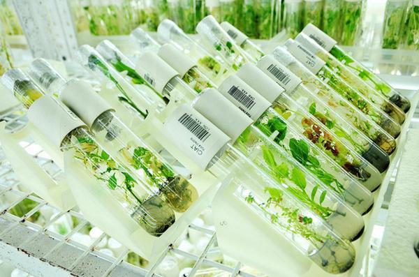 ГМО и политика раскачки ситуации в стране (600x397, 285Kb)