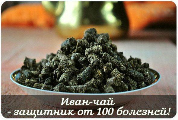 4208855_wqHw5qbXaak (590x400, 60Kb)