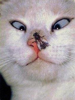 Смешные кошки3 (253x337, 98Kb)