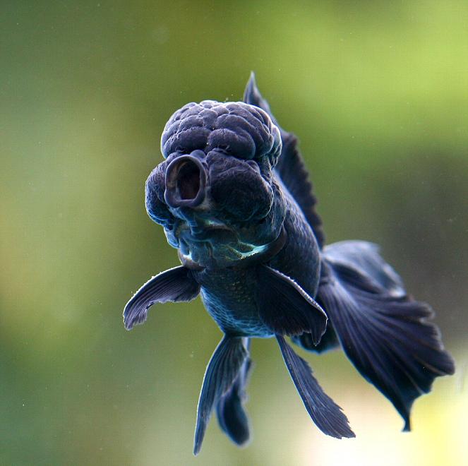 аквариумные рыбки фото с названиями