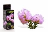 Исцеляющие ароматы (5) (160x107, 17Kb)