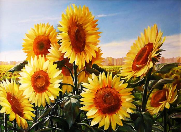 слънчогледи Муртазин Ильдус. (699x510, 190Kb)