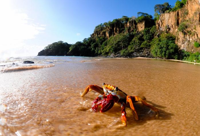 бразильский пляж Baia do Sancho 7 (700x474, 379Kb)