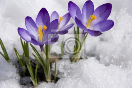 fotooboi_15368748195417 (450x302, 129Kb)