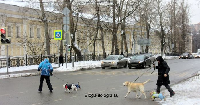 4 собаки переходят через улицу  вместе с хозяевами. Зима в Москве (700x366, 64Kb)