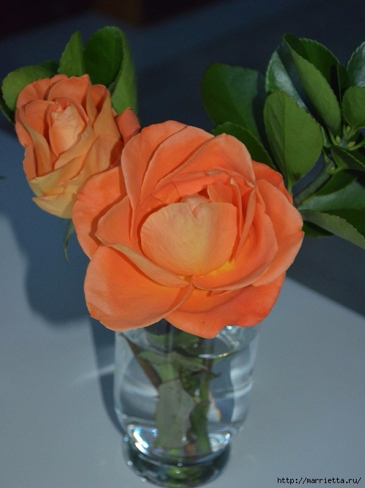 Цветы для вас (33) (523x700, 206Kb)