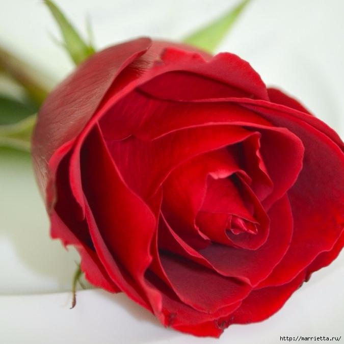 Цветы для вас (39) (675x675, 186Kb)
