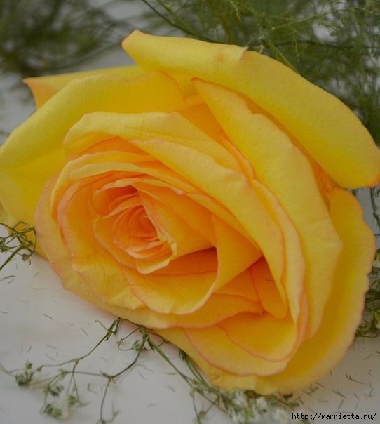 Цветы для вас (43) (542x604, 164Kb)
