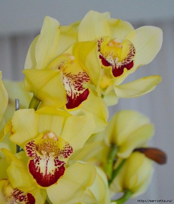 Цветы для вас (73) (599x700, 253Kb)
