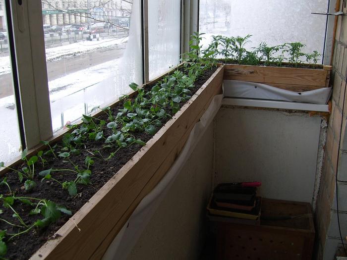 Что можно посадить на балконе в мае.