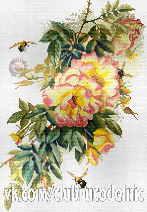 Цветущий шиповник (487x700, 480Kb)