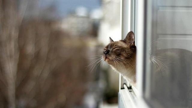 Мартовские кошки (13) (640x359, 73Kb)