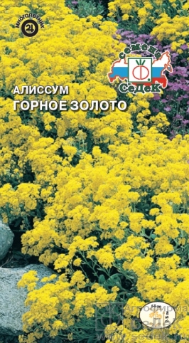 alissum_gornoe_zoloto (266x482, 236Kb)