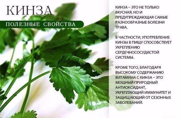 Зелень для здоровья (604x398, 239Kb)