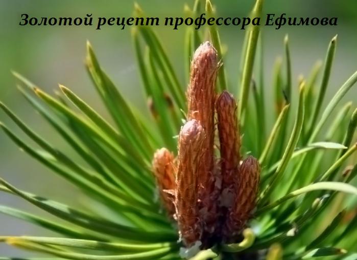 2749438_Zolotoi_recept_professora_Efimova (700x508, 442Kb)
