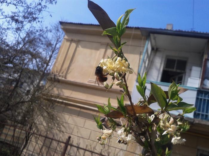 пчёл (700x525, 461Kb)
