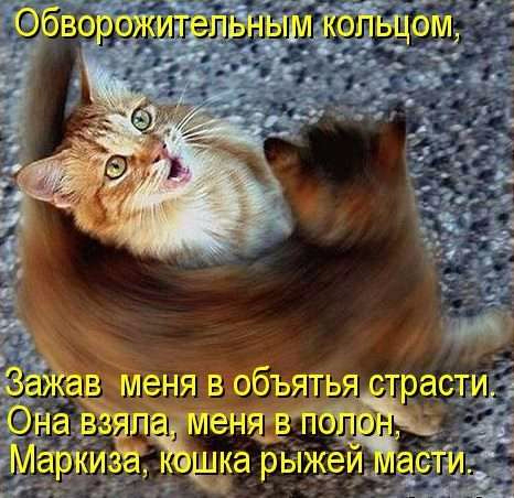 Прикольные стихи к подарку кошка 50