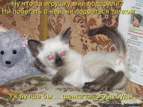 1489170005_novaya-kotomatrica-28 (500x374, 207Kb)