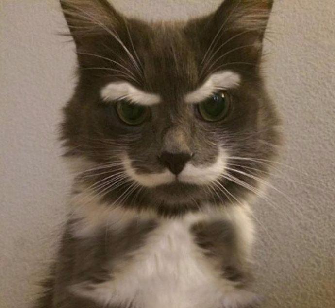 13. Суровый кот! (690x633, 216Kb)