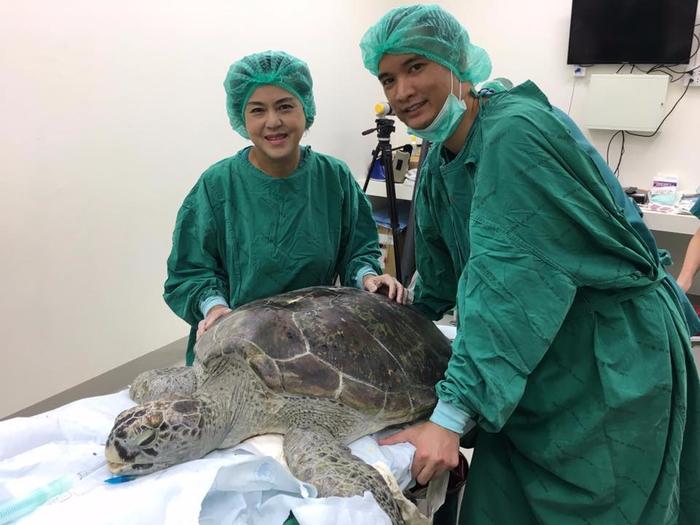 черепаха банк 2 (700x525, 308Kb)
