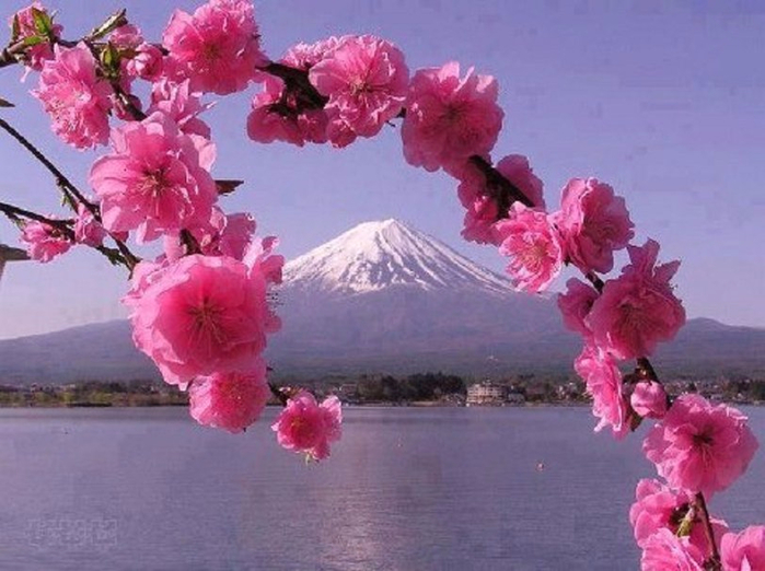 203237__majestic-view-through-pink-blossoms_p (700x522, 328Kb)